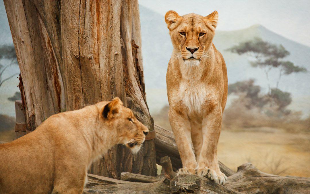 Zimbabwe Parks Director Opposes Hunting Ban