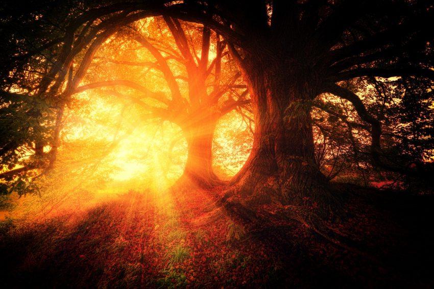 Fantastical forest.