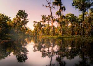 Louisiana Wetland